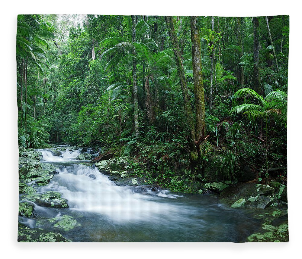 Scenics Fleece Blanket featuring the photograph Rainforest Panorama Xxxl by Turnervisual