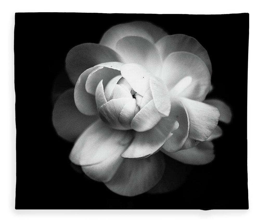 Black Background Fleece Blanket featuring the photograph Ranunculus Flower by Annfrau