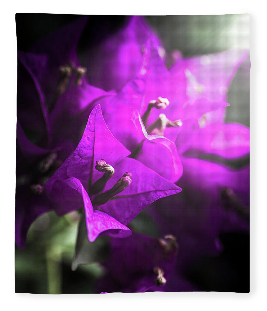 Flower Fleece Blanket featuring the photograph Rays Of Bougainvillea by Jorgo Photography - Wall Art Gallery