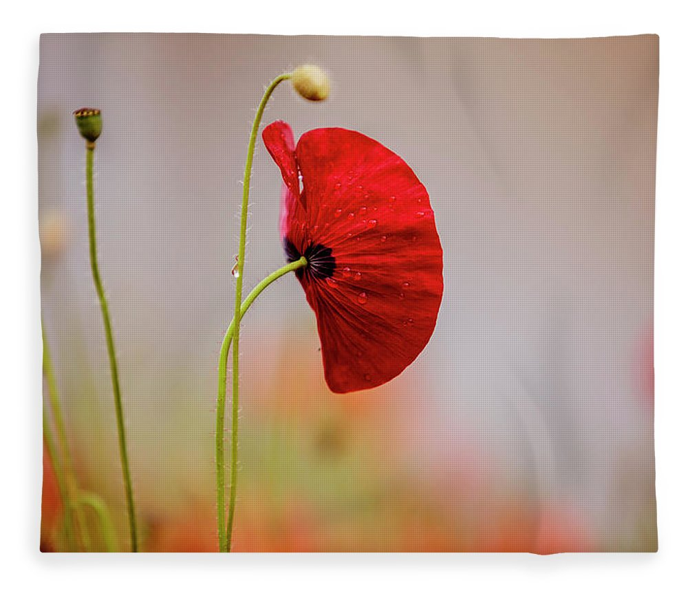 Poppy Fleece Blanket featuring the photograph Red Corn Poppy Flowers by Nailia Schwarz