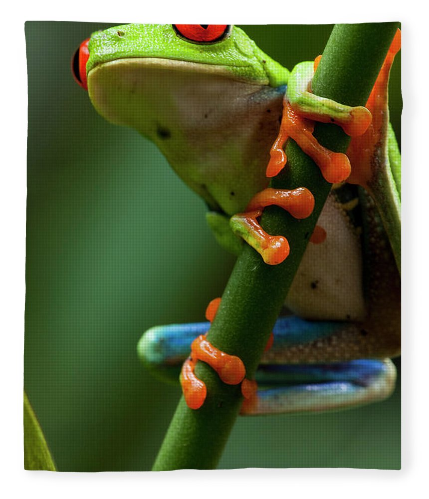One Animal Fleece Blanket featuring the photograph Red-eyed Tree Frog, Costa Rica by Paul Souders