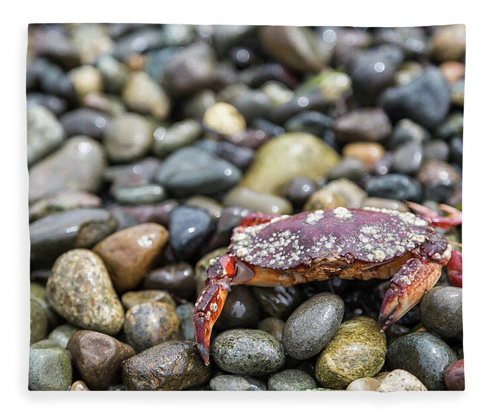 Water's Edge Fleece Blanket featuring the photograph Red Rock Crab On A Pebble Covered Beach by Stevedf