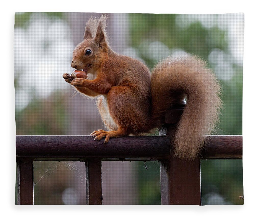 Animal Themes Fleece Blanket featuring the photograph Red Squirrel Getting Ready For Winter by S0ulsurfing - Jason Swain