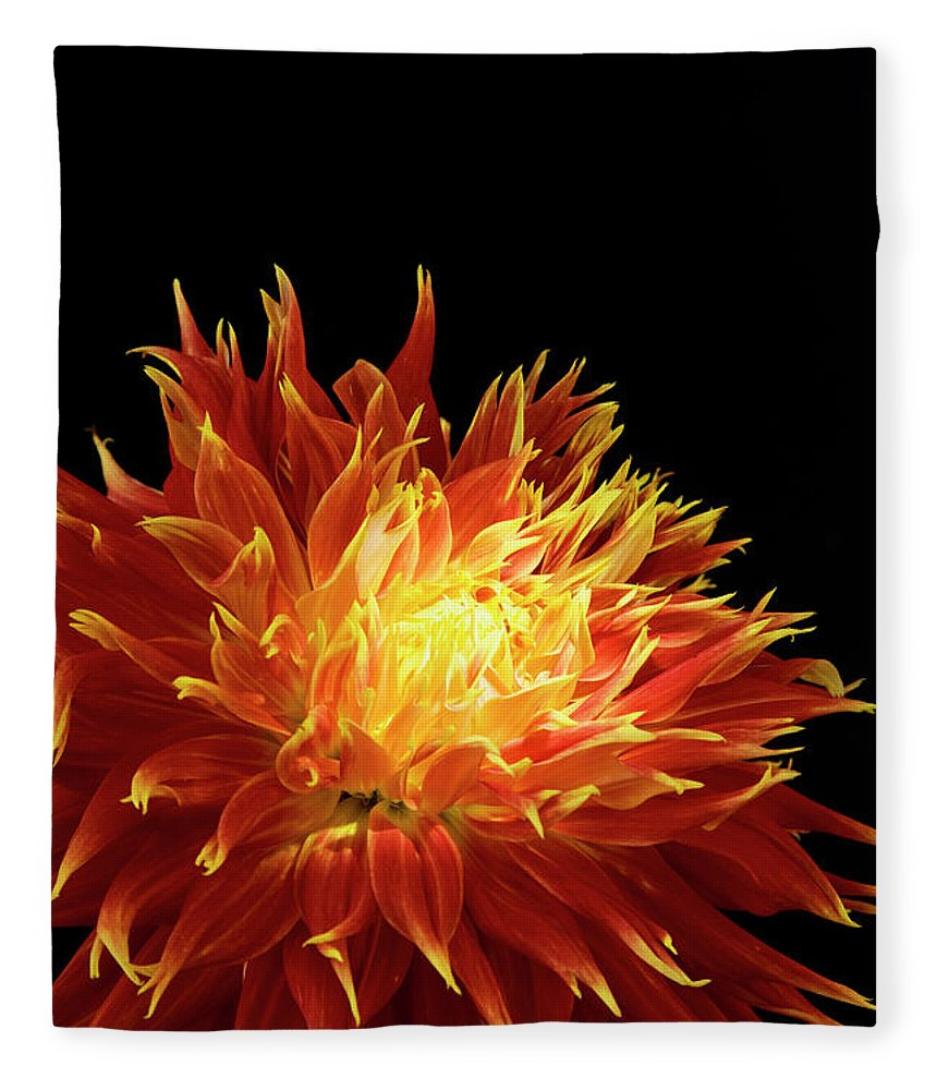 Firework Display Fleece Blanket featuring the photograph Red-yellow Dahlia Flower by Eyepix