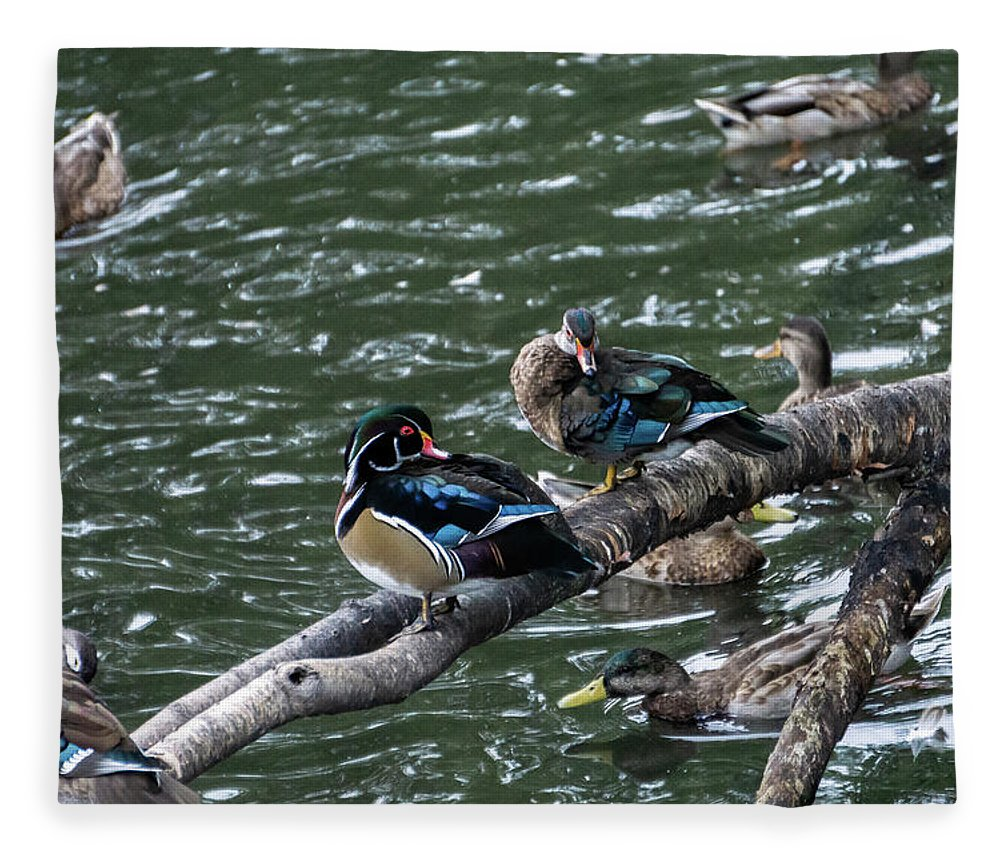 Duck Fleece Blanket featuring the photograph Resting Ducks by Rob Olivo