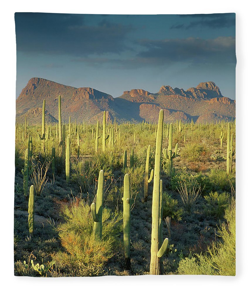 Saguaro Cactus Fleece Blanket featuring the photograph Saguaro Cactus In Sonoran Desert And by Kencanning