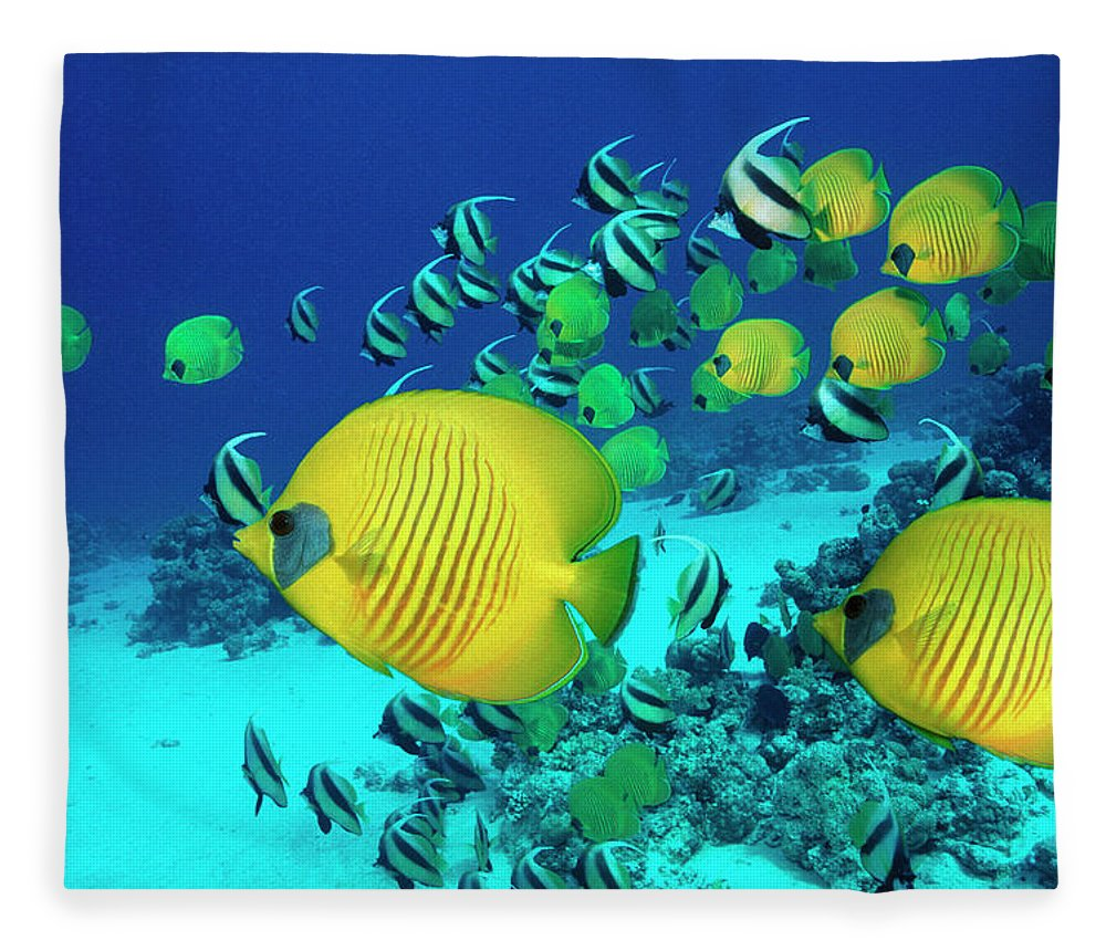 Underwater Fleece Blanket featuring the photograph School Of Butterfly Fish Swimming On by Georgette Douwma