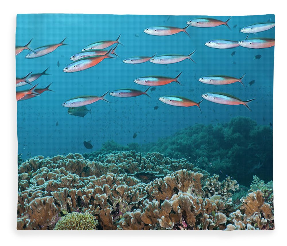 Security Fleece Blanket featuring the photograph School Of Tropical Fish On A Coral Reef by Jeff Hunter