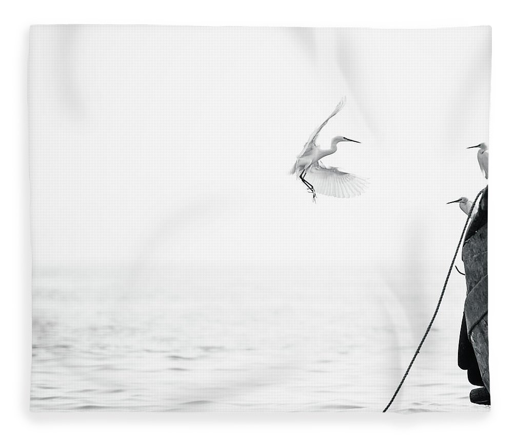 Animal Themes Fleece Blanket featuring the photograph Sea Birds Of Shekou Shenzhen by Capturing A Second In Life, Copyright Leonardo Correa Luna