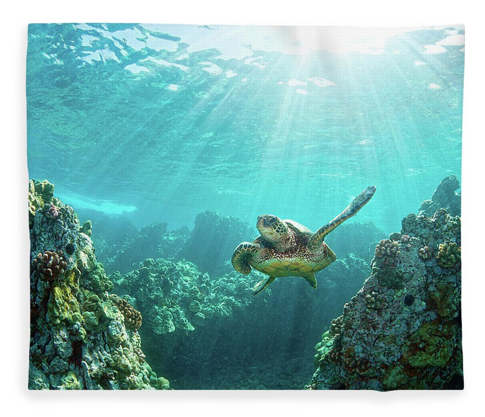 Underwater Fleece Blanket featuring the photograph Sea Turtle Coral Reef by M.m. Sweet