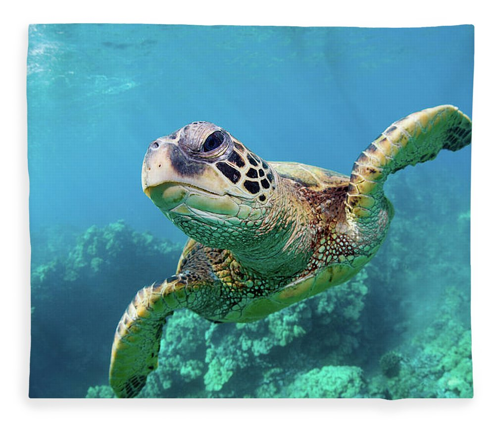 Underwater Fleece Blanket featuring the photograph Sea Turtle, Hawaii by M Swiet Productions