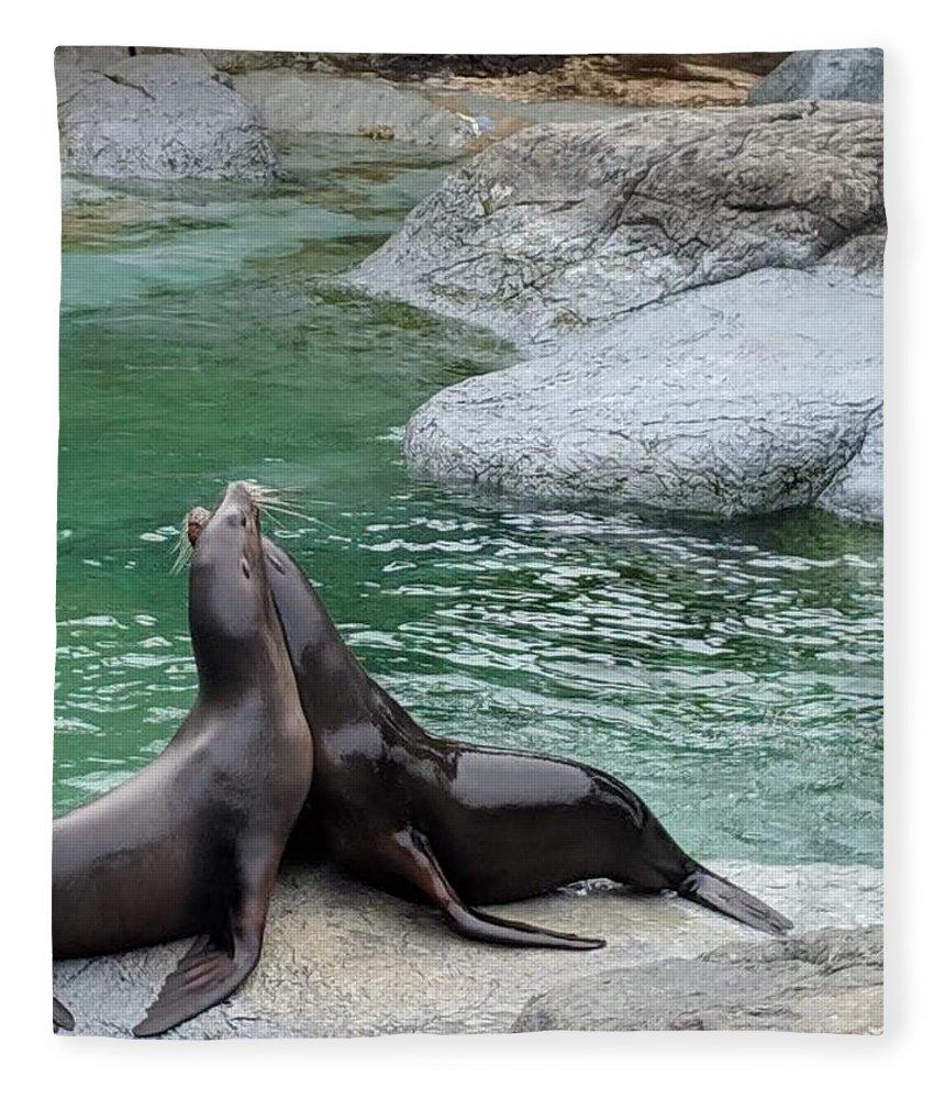 Blue Fleece Blanket featuring the photograph Seal by Aswini Moraikat Surendran