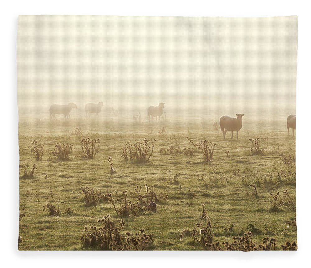 Dawn Fleece Blanket featuring the photograph Sheep Viewed On A Misty Morning by Travelpix Ltd