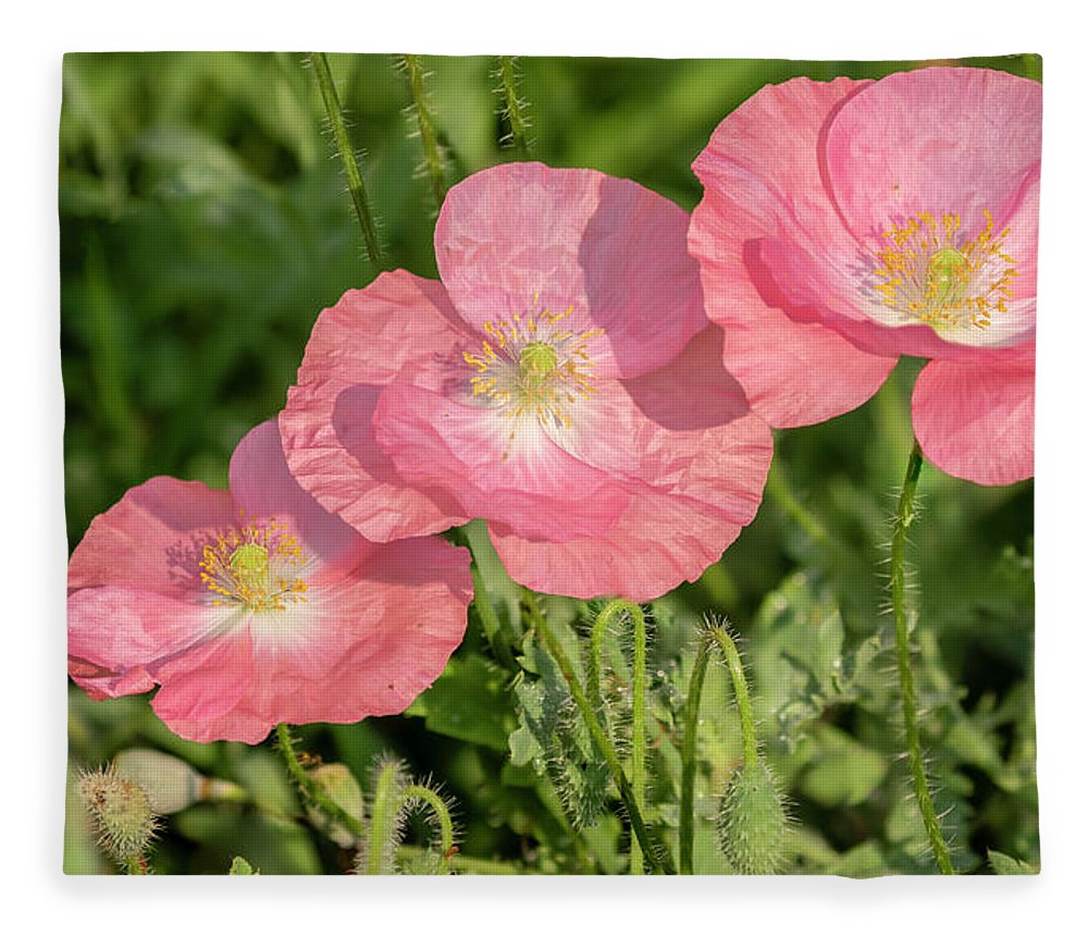 Shirley Poppy Fleece Blanket featuring the photograph Shirley Poppy 2018-21 by Thomas Young