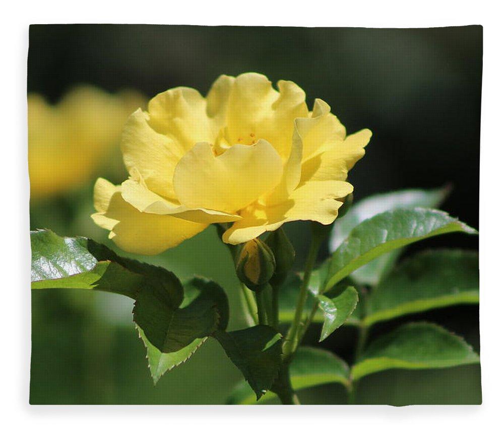 La Rioja Fleece Blanket featuring the photograph Single La Rioja Yellow Rose and Bud by Colleen Cornelius