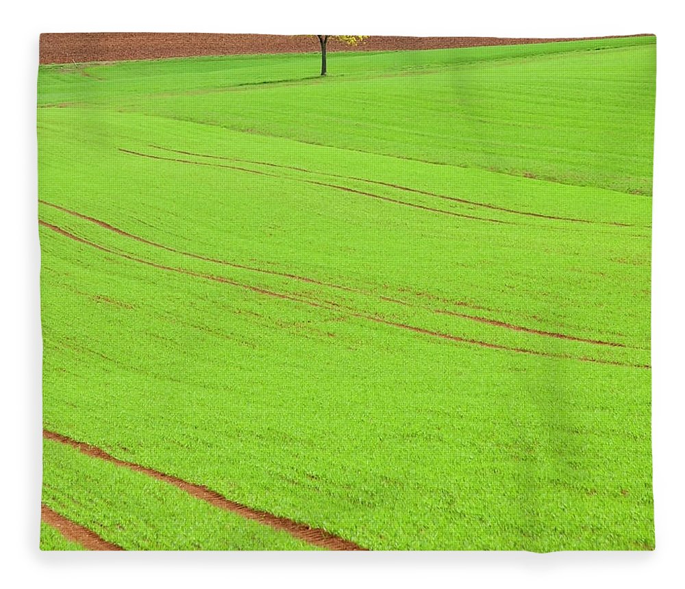 Outdoors Fleece Blanket featuring the photograph Single Tree In Green Field by Henglein And Steets