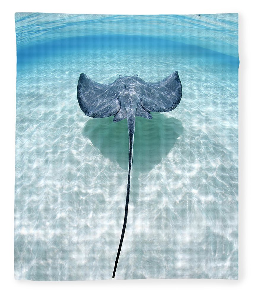 Underwater Fleece Blanket featuring the photograph Southern Stingray Cayman Islands by Justin Lewis