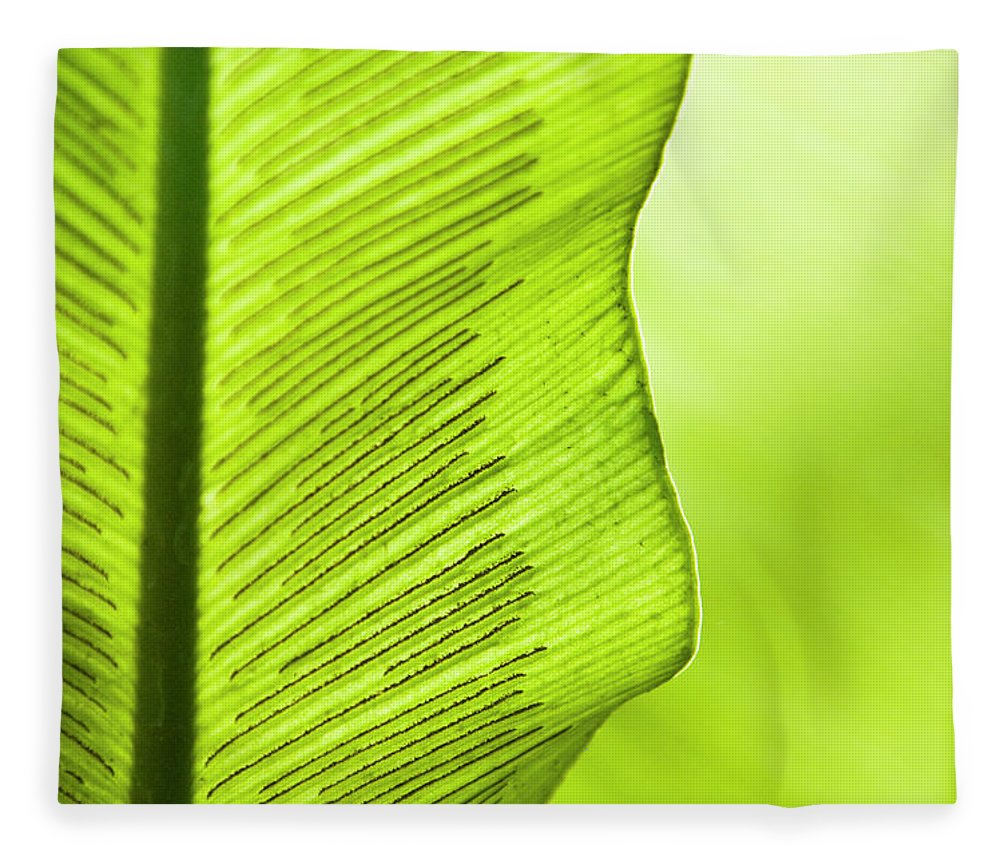 Outdoors Fleece Blanket featuring the photograph Spores Of A Fern by By Ken Ilio