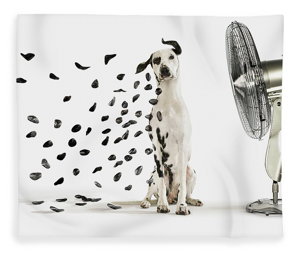 Pets Fleece Blanket featuring the photograph Spots Flying Off Dalmation Dog by Gandee Vasan