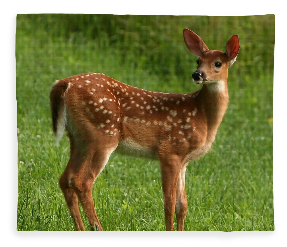 Grass Fleece Blanket featuring the photograph Spotted Fawn by Spiraling Road Photography