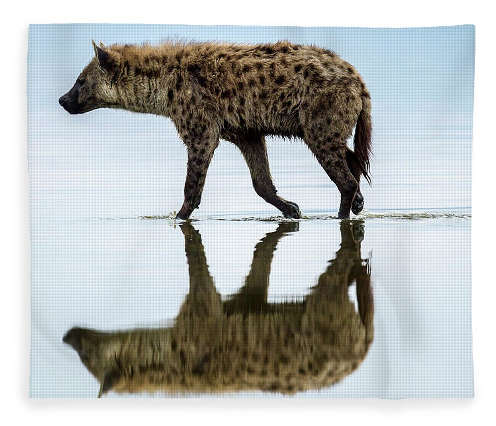 Kenya Fleece Blanket featuring the photograph Spotted Hyena Looking For Weak Flamingos by Manoj Shah
