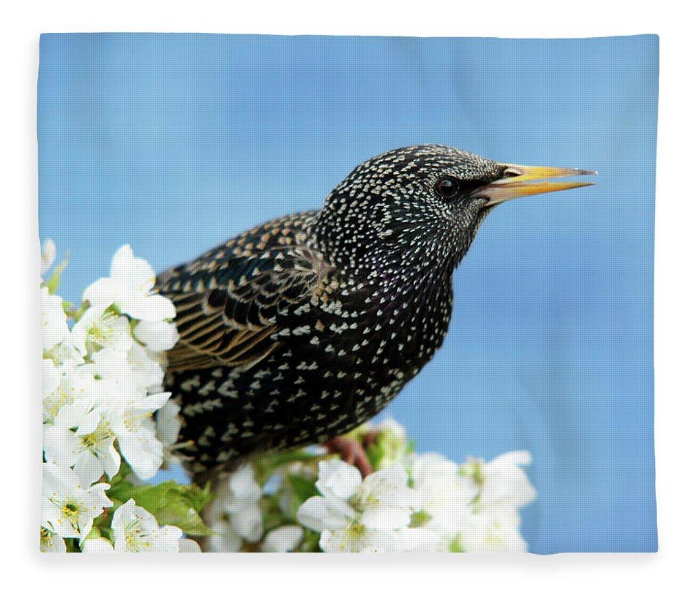 Songbird Fleece Blanket featuring the photograph Star In Springtime by Schnuddel