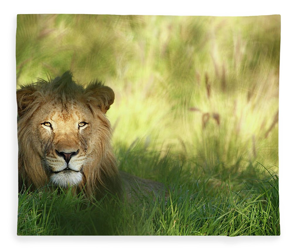 Tropical Rainforest Fleece Blanket featuring the photograph Staring Lion In Field Of Grass With by Jimkruger