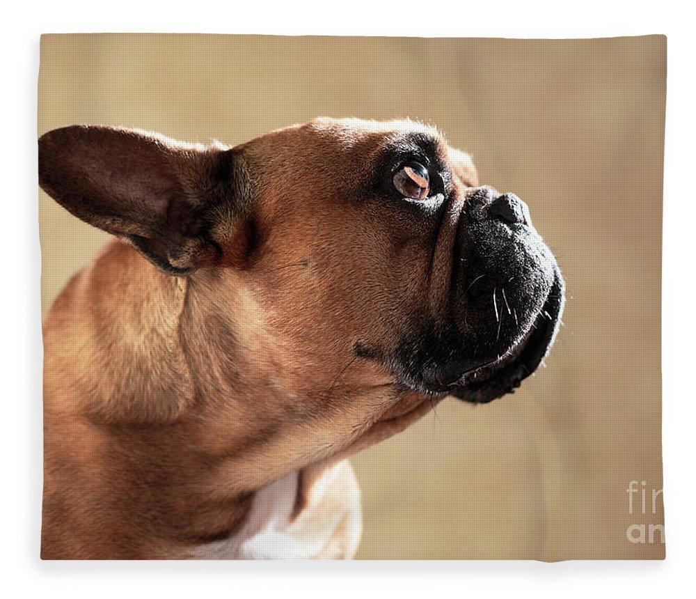 French Bulldog Fleece Blanket featuring the photograph Striking Head by Jana Behr
