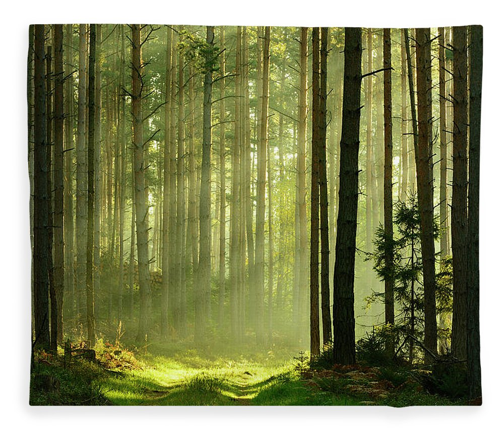 Scenics Fleece Blanket featuring the photograph Sunbeams Breaking Through Pine Tree by Avtg