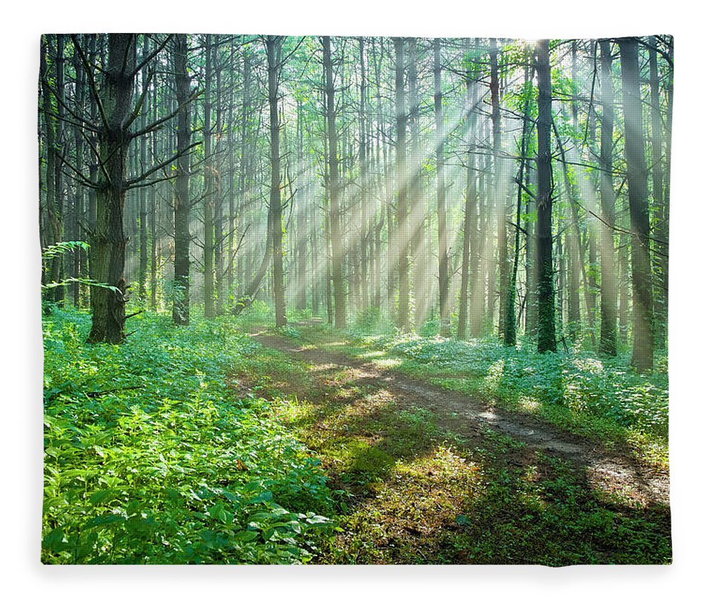 Outdoors Fleece Blanket featuring the photograph Sunbeams Filtering Through Trees On A by Drnadig
