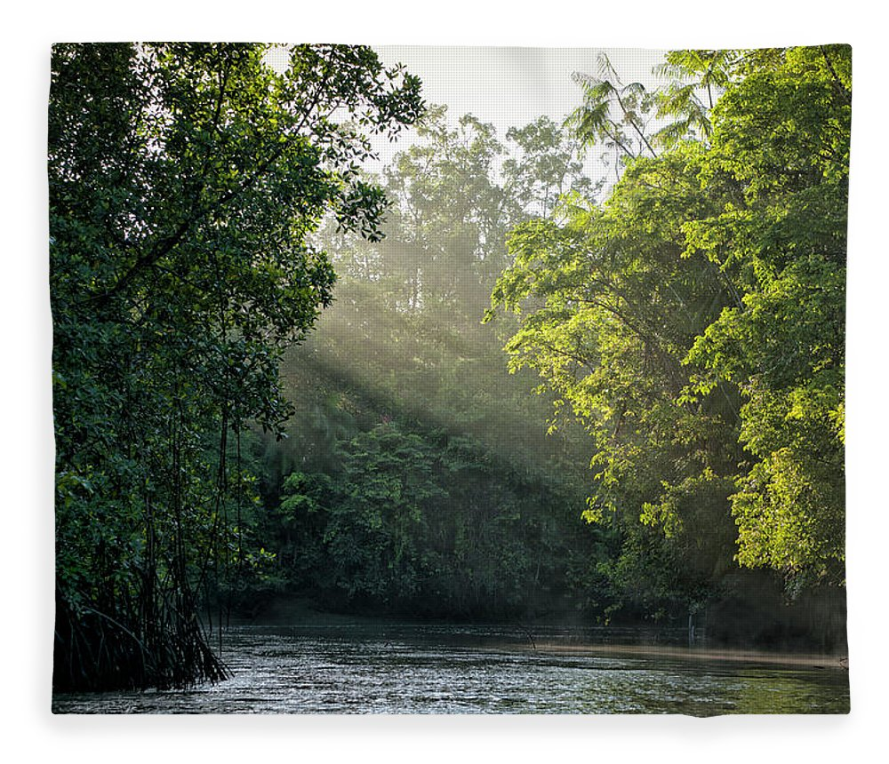 Tropical Rainforest Fleece Blanket featuring the photograph Sunlight Shining Through Trees On River by Brasil2