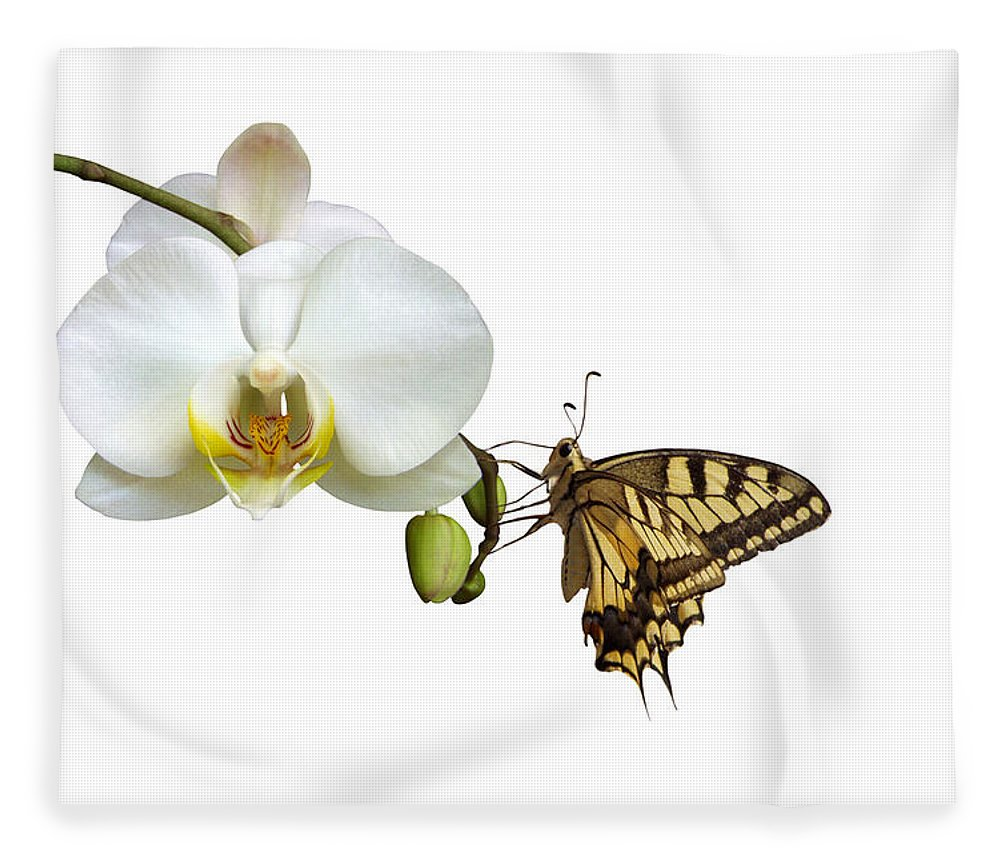 White Background Fleece Blanket featuring the photograph Swallowtail On White Orchid by Photographerolympus