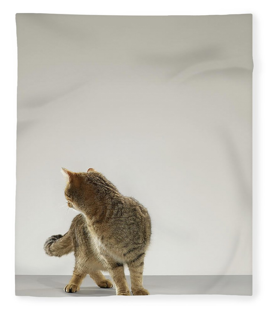 Pets Fleece Blanket featuring the photograph Tabby Cat Looking Behind by Michael Blann
