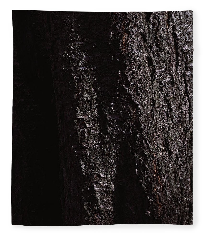 Landscape Fleece Blanket featuring the photograph Tallest Tree by Eliza Spatar