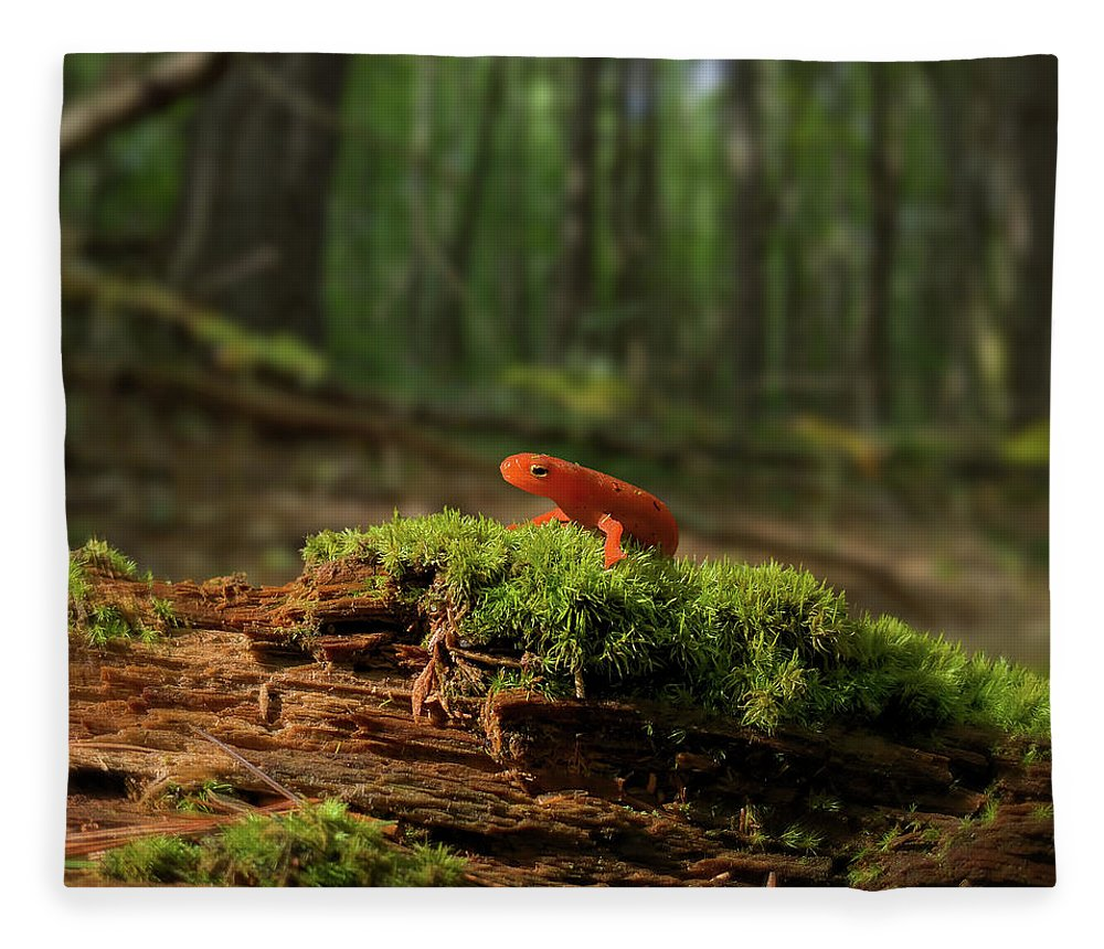 Red Eft Fleece Blanket featuring the photograph The Moss Boss by Jerry LoFaro