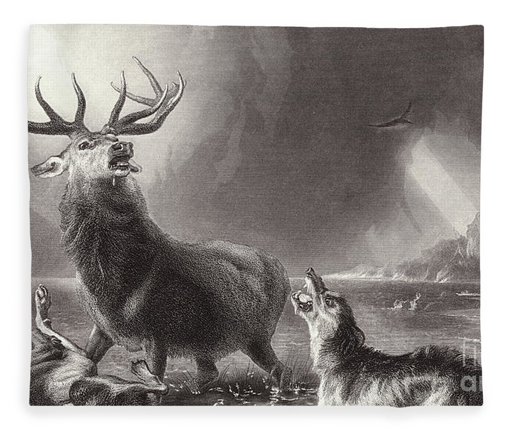 Landseer Fleece Blanket featuring the drawing The Stag At Bay by Edwin Landseer
