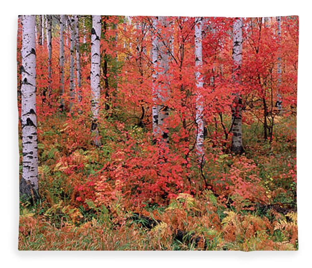 Panoramic Fleece Blanket featuring the photograph The Wasatch Mountain Forest Of Maple by Mint Images - David Schultz