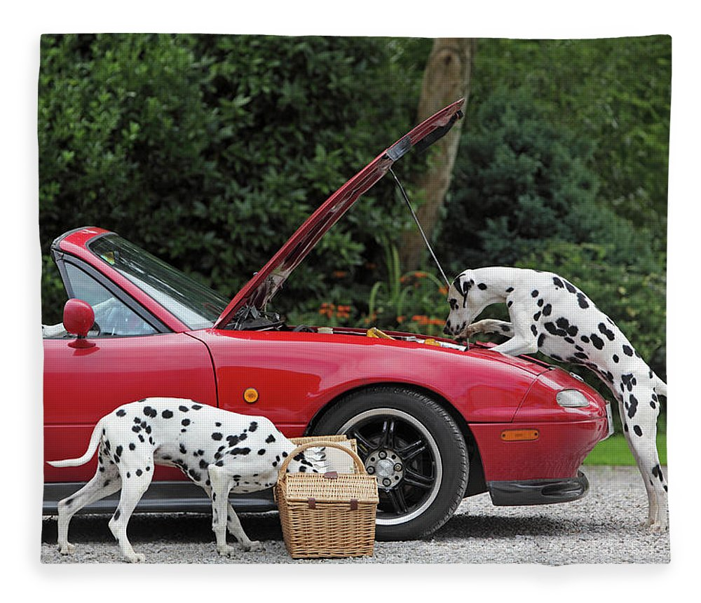 Pets Fleece Blanket featuring the photograph Three Dalmatians Around Red Sports Car by Peter Cade