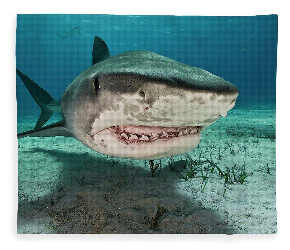 Underwater Fleece Blanket featuring the photograph Tiger Sharks Galeocerdo Cuvier Are by Rodrigo Friscione