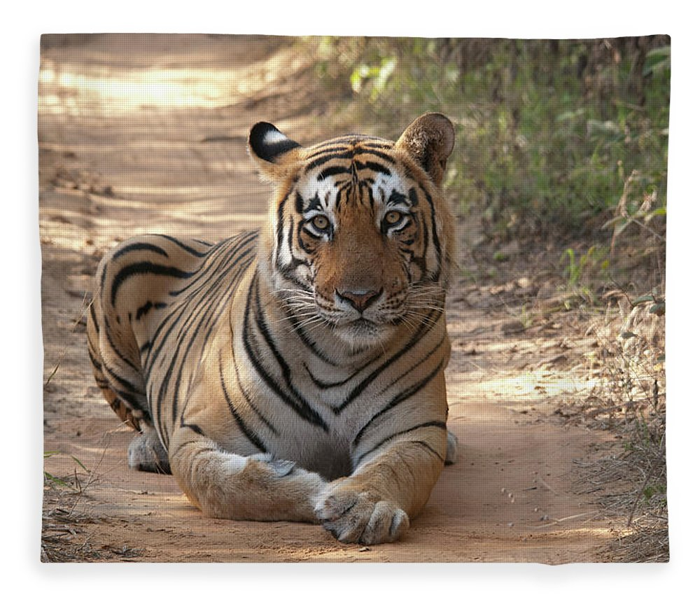 Ranthambore National Park Fleece Blanket featuring the photograph Tiger Sitting On Field by Chaithanya Krishna Photography