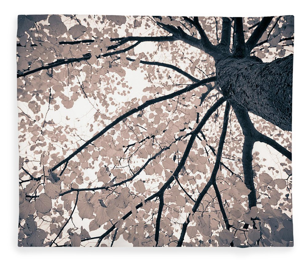 Spray Fleece Blanket featuring the photograph Tree Branches by Gianlucabartoli