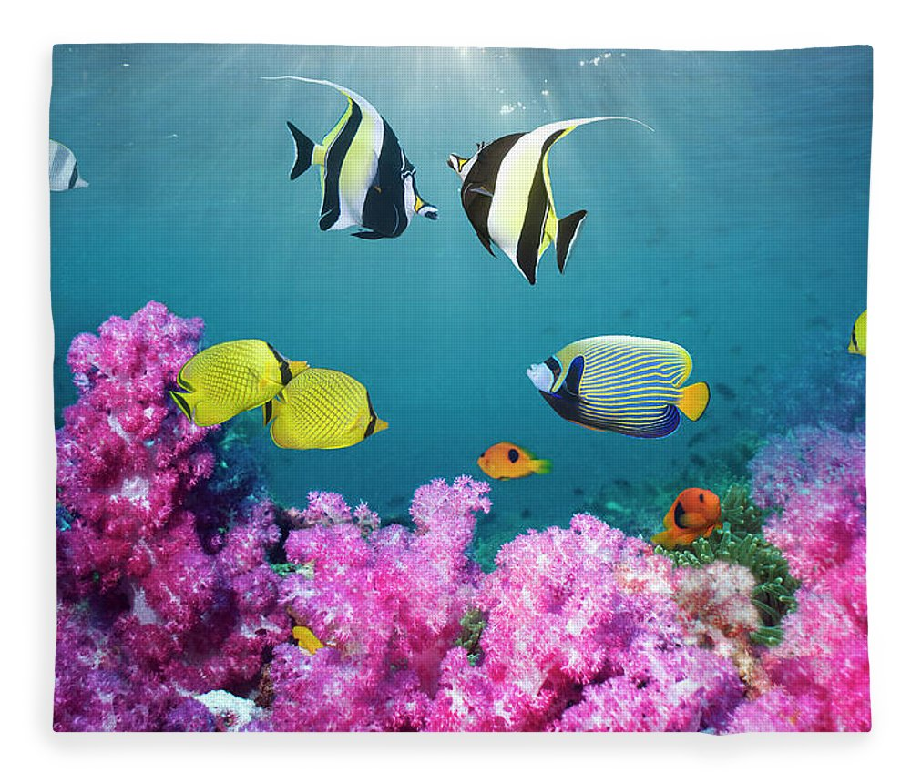 Tranquility Fleece Blanket featuring the photograph Tropical Reef Fish Over Soft Corals by Georgette Douwma