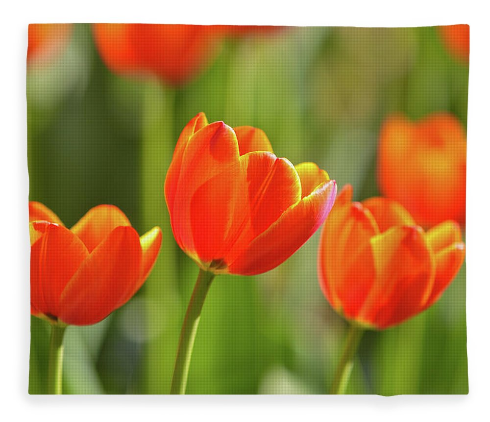 Flowerbed Fleece Blanket featuring the photograph Tulip by Ithinksky
