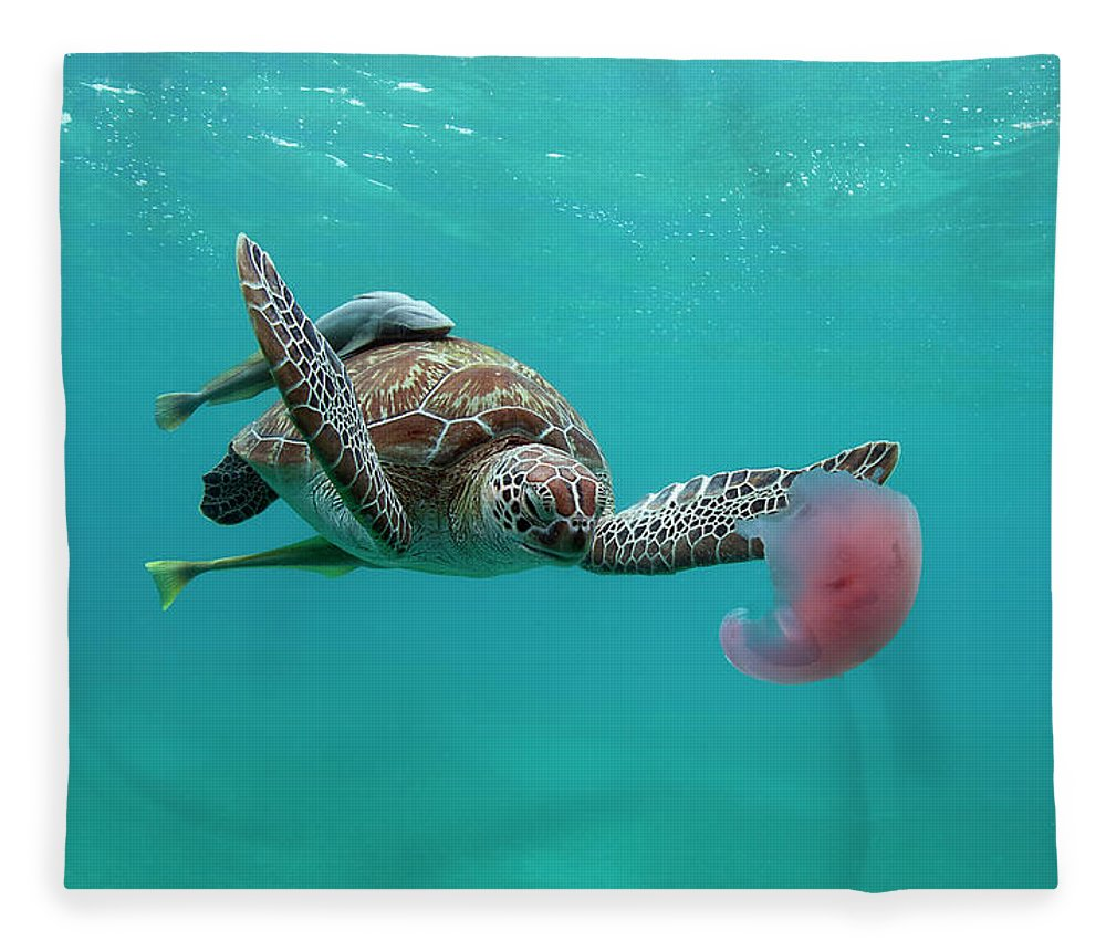 Underwater Fleece Blanket featuring the photograph Turtle Eating Jellyfish by Alastair Pollock Photography