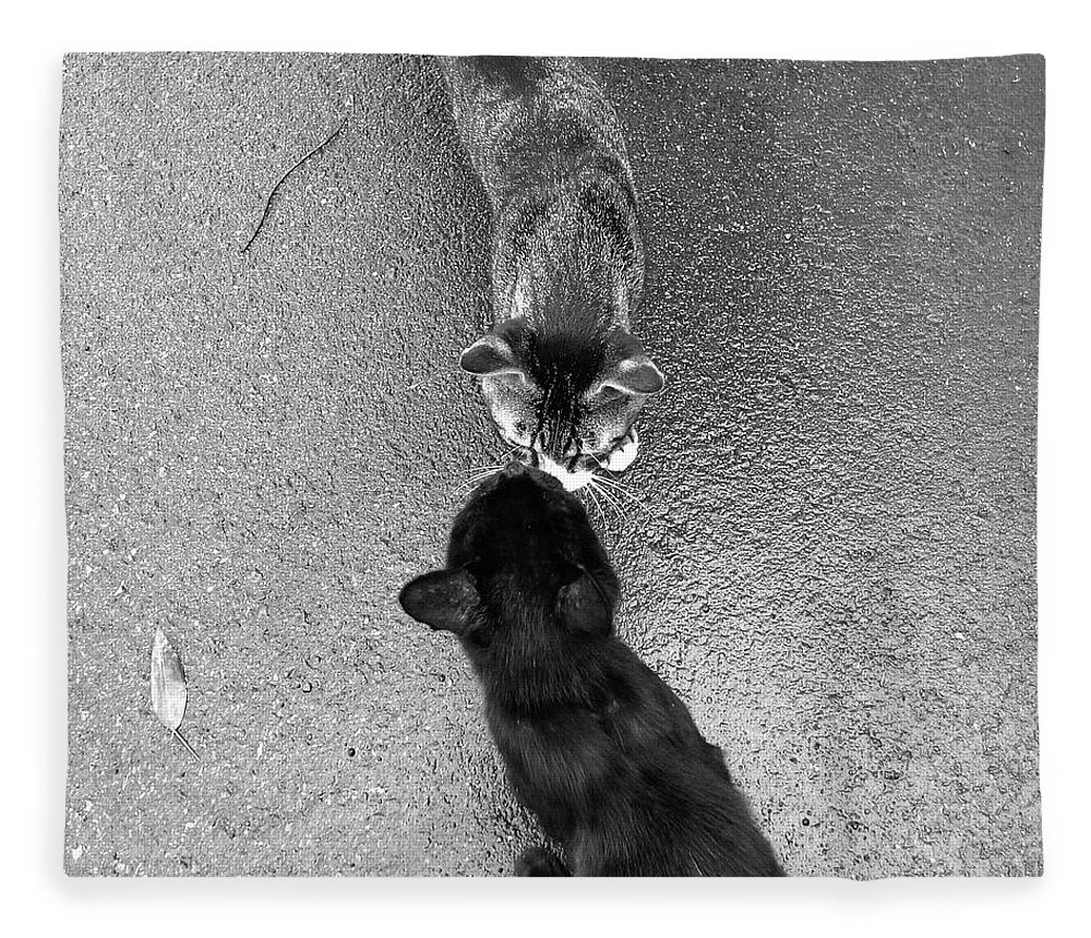 Pets Fleece Blanket featuring the photograph Two Kittens Which Kiss by Photographer, Loves Art, Lives In Kyoto