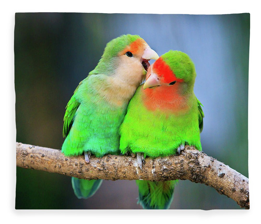 Togetherness Fleece Blanket featuring the photograph Two Peace-faced Lovebird by Feng Wei Photography
