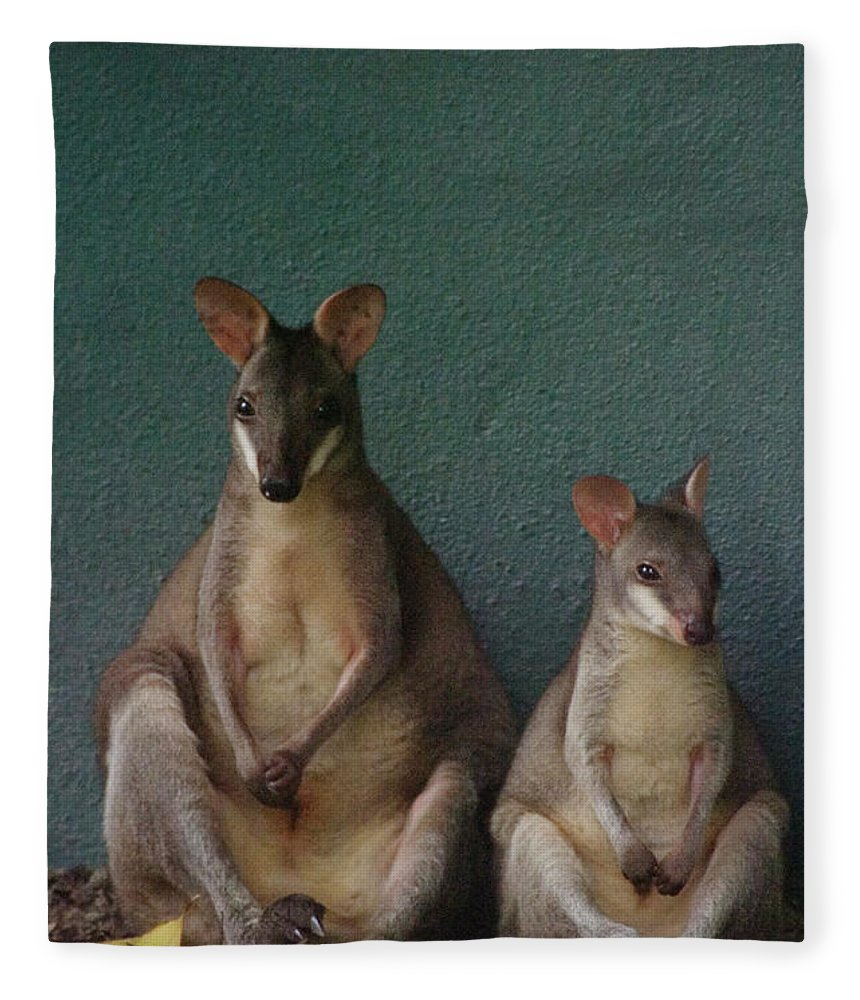 Animal Themes Fleece Blanket featuring the photograph Two Sitting Wallabies by Ming Thein / Mingthein.com