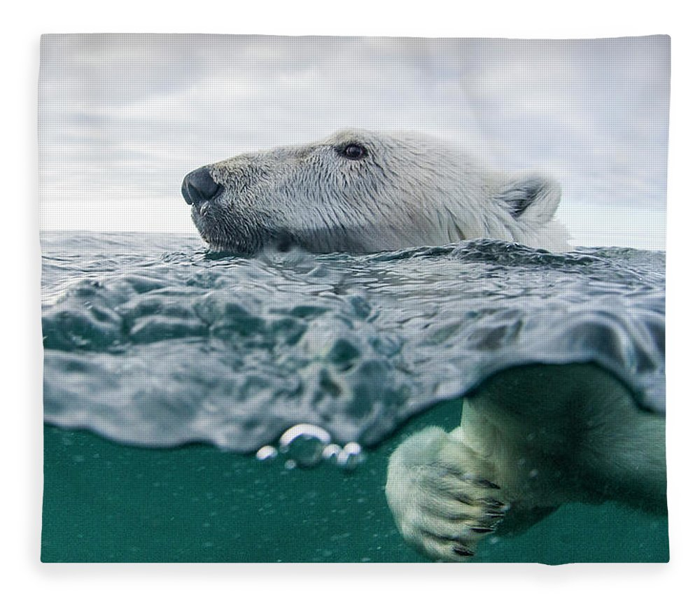 Paw Fleece Blanket featuring the photograph Underwater Polar Bear In Hudson Bay by Paul Souders