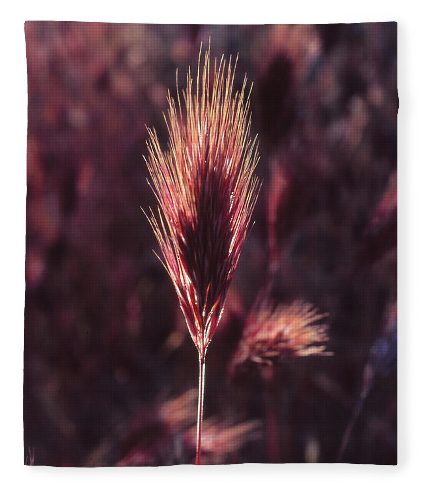 Fleece Blanket featuring the photograph Untitled by Randy Oberg