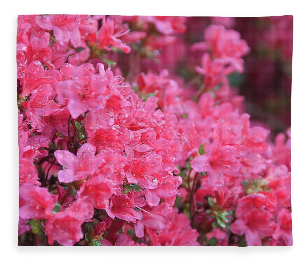 North Carolina Fleece Blanket featuring the photograph Usa, North Carolina, Asheville, Azalea by Dkar Images